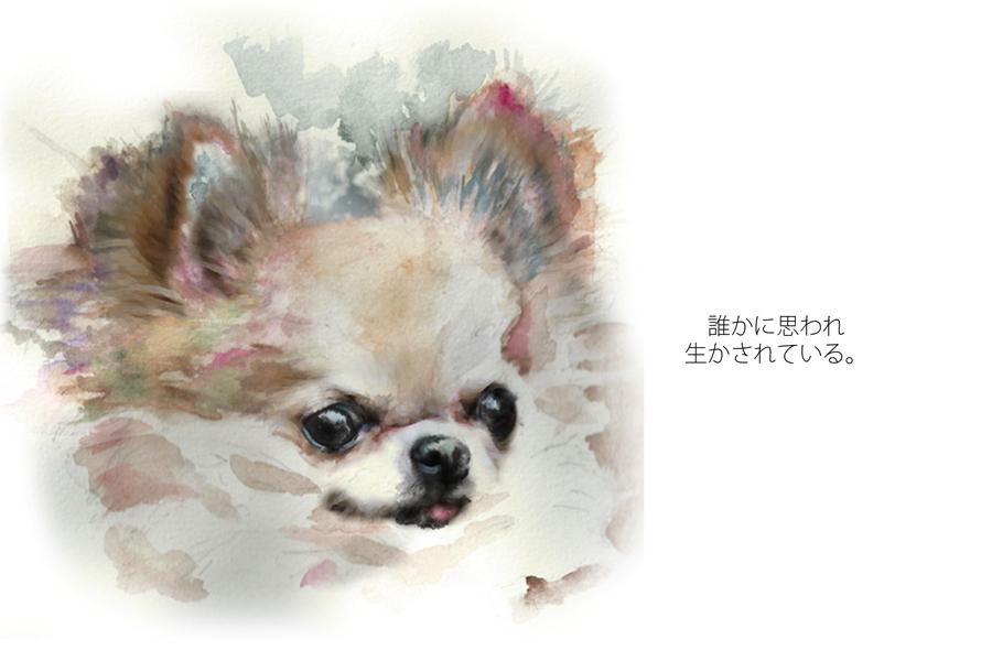Tea-chan 使うコピー copy copy
