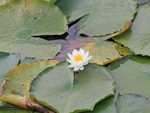 妙高山といもり池-4