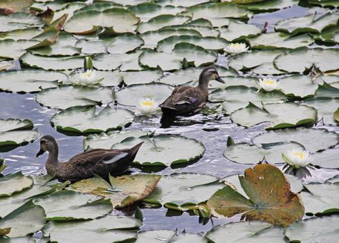 妙高山といもり池-5