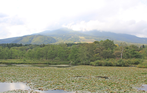 妙高山といもり池-6