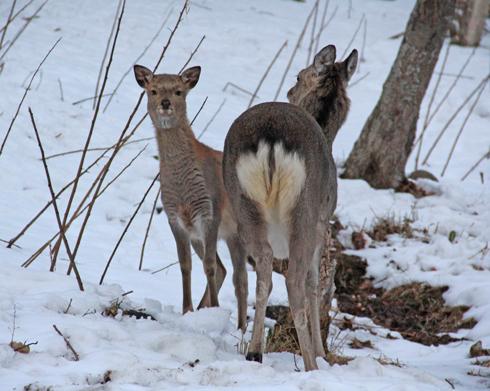 冬の知床連山2014-5