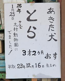 大館アメッコ市と秋田犬-7