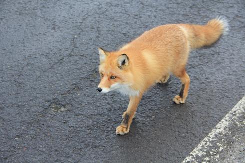 知床の動物2015-2