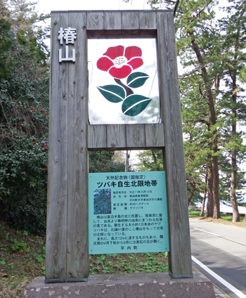 夏泊半島椿山2015-1