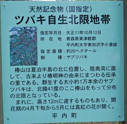 夏泊半島椿山2015-2