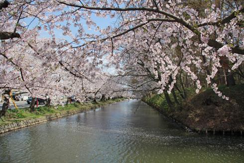 弘前城桜祭り2015昼-1