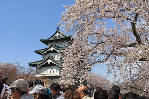 弘前城桜祭り2015昼-7