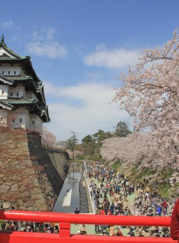 弘前城桜祭り2015昼-8