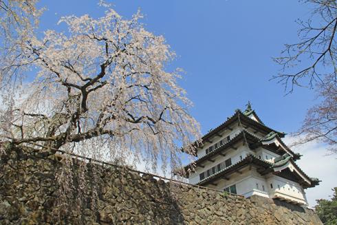 弘前城桜祭り2015昼-14