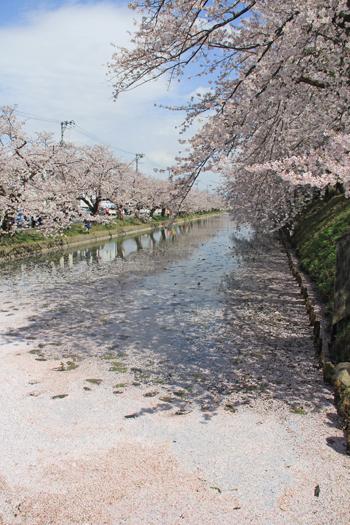 弘前城桜祭り2015昼-17