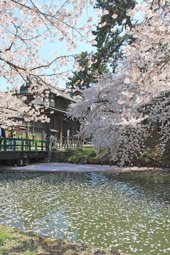 弘前城桜祭り2015昼-18