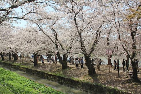 弘前城桜祭り2015昼-19