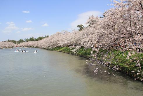 弘前城桜祭り2015昼-20