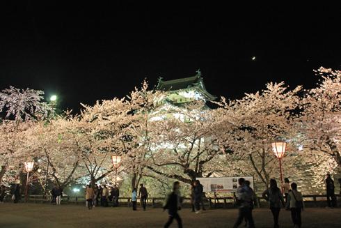 弘前城桜祭り2015夜桜-2