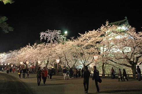 弘前城桜祭り2015夜桜-4