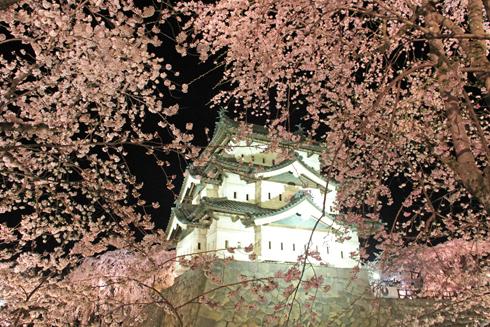弘前城桜祭り2015夜桜-5