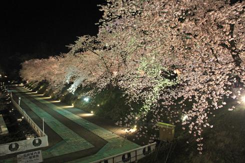 弘前城桜祭り2015夜桜-8
