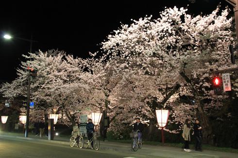 弘前城桜祭り2015夜桜-17