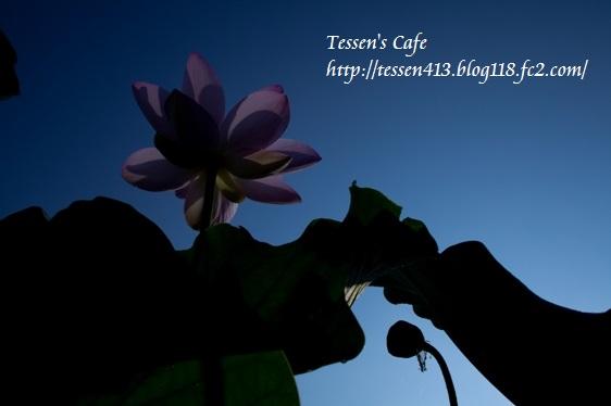 TCIMG_3479.jpg
