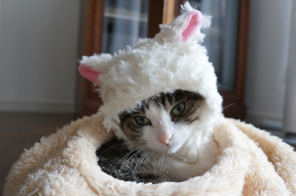 羊の皮を被った猫