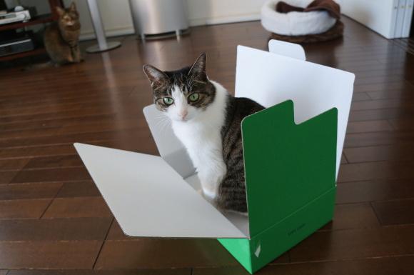 手帳に猫はついてきません