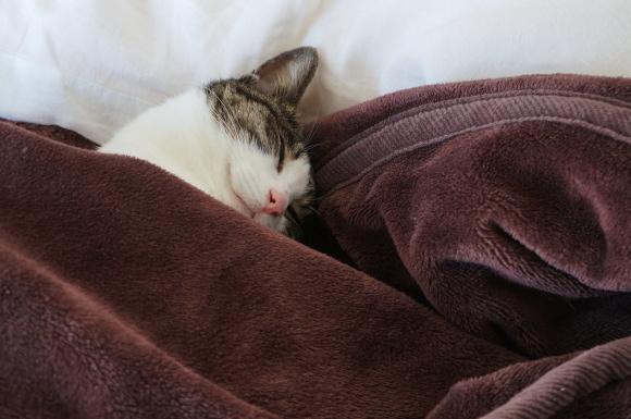 起こさないで下さい。ねこが寝てます。