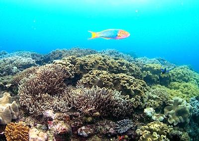 沖縄の海続き