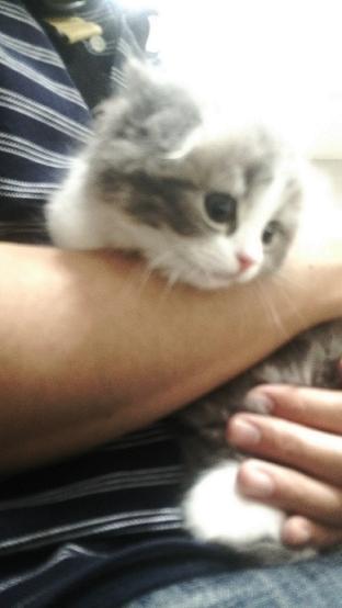 ブログ猫写真1