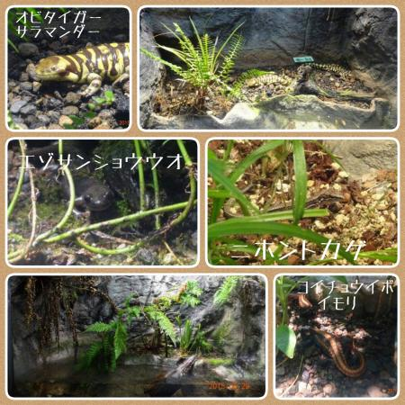 2015-05-30-15-22-19_deco_convert_20150530165105.jpg