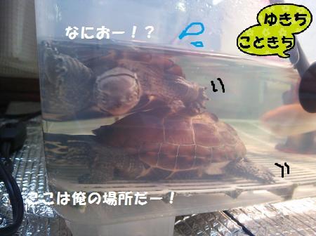 DSC_1130_convert_20150418120643.jpg