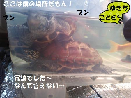 DSC_1132_convert_20150418122816.jpg
