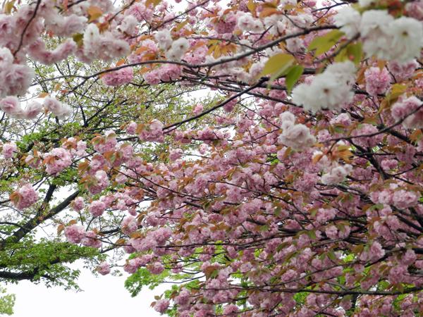 2015-04-20_hana_0258.jpg