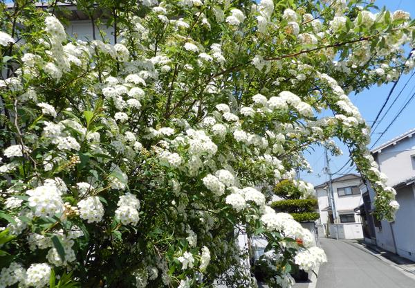 2015-04-23_hana_0198.jpg