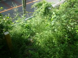 巡視路入り口は草ぼうぼう