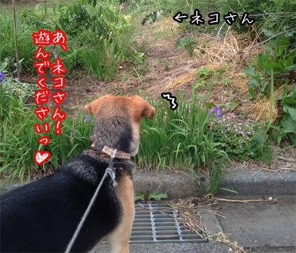 ネコさん発見jpg
