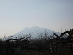 150409りんご畑から岩木山