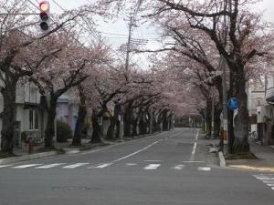 150416桜川通り