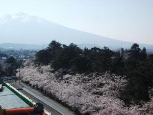 150423屋上から桜