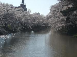 150423外濠と桜
