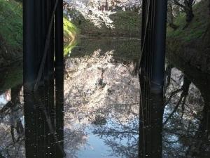 150423お濠に桜