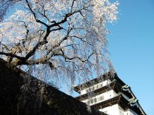 150423しだれ桜とお城