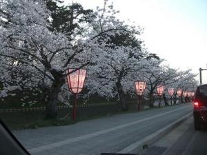150423夜桜前