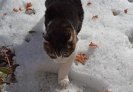 2014222モグ雪