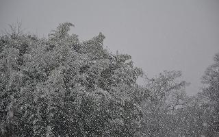 2015122雪景色