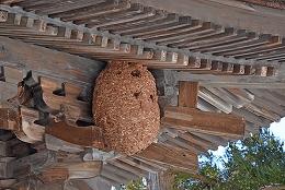 大宝寺ハチの巣
