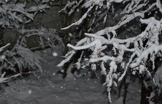 2015115雪ふり