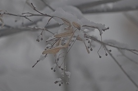 2015215雪3