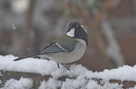 2015215雪4