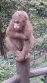 44自然生態猴区