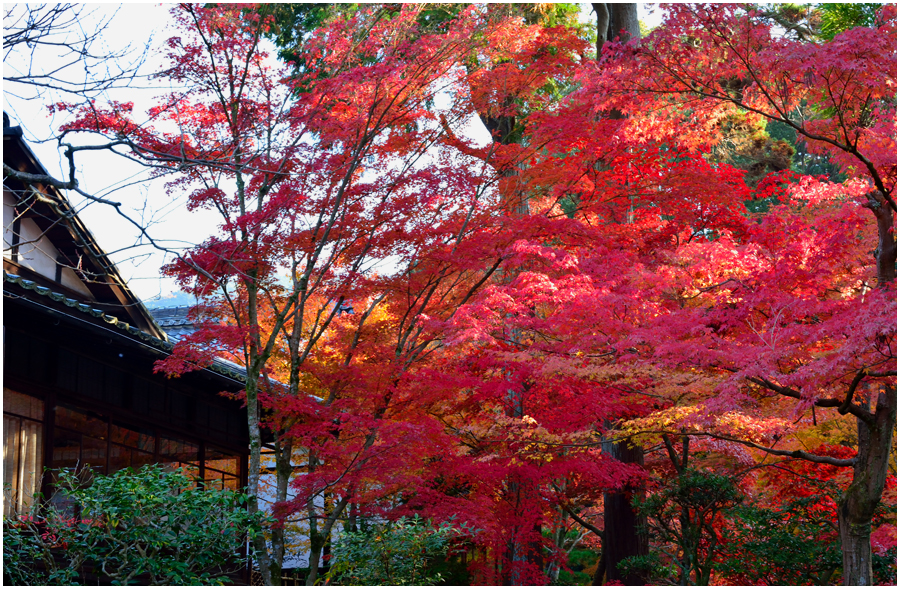 秋の京都・助手4